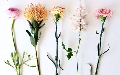 Wat planten in jouw interieur met je doen + 10 tips!